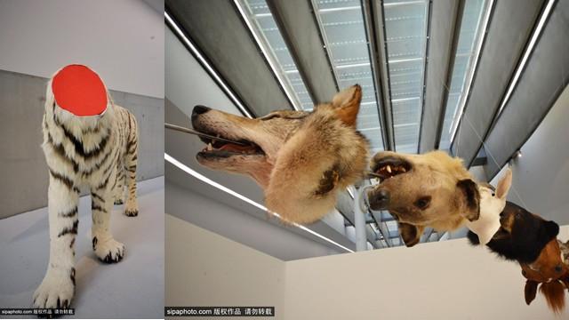 意大利残缺动物展:新视角阐释物种保护