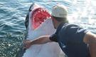 男子惨遭大白鲨吞食
