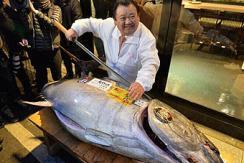 日本蓝鳍金枪鱼新年拍出23万元高价