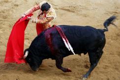 图片一周精选 西班牙斗牛士勇战公牛
