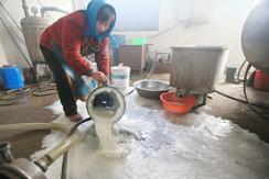 京冀地区牛奶滞销 奶农每天倒上千斤