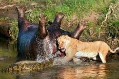 【2014·环球视界】动物凶猛
