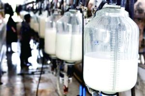 飞鹤乳业回应收奶后再倒奶 称付出了巨大成本