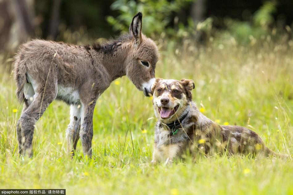 欧美性人与动物先锋影�_欧美人与交狗配电影图片
