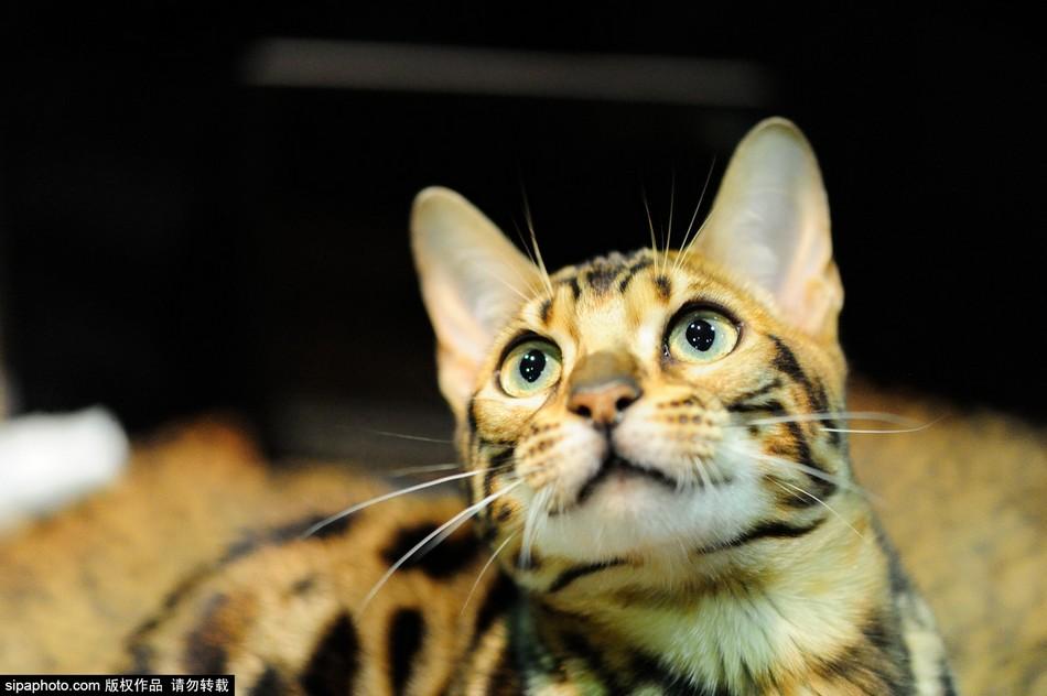 壁纸 动物 猫 猫咪 小猫 桌面 950_632