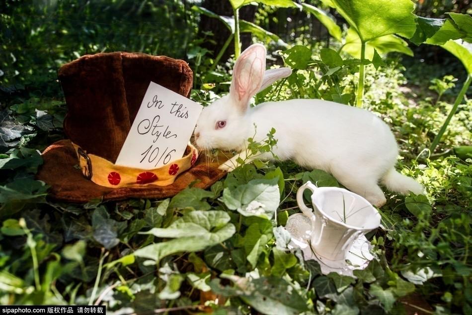 小白兔歌谱
