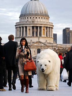 英街头惊现北极熊 坐电梯逛景点