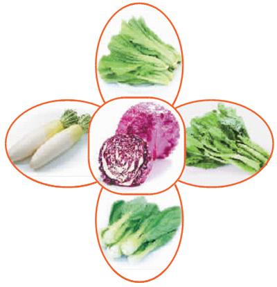 6类蔬菜这样吃能防癌! - 健康快车 - 董路的健康快车