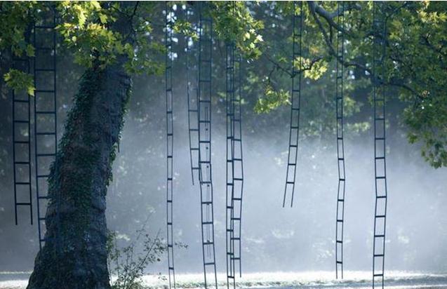 奇葩极了!居然有人花费2年时间给树装梯子