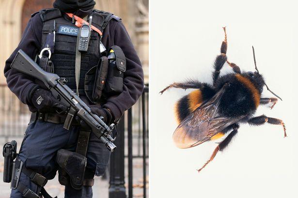 英警队成立养蜂俱乐部缓解警员压力