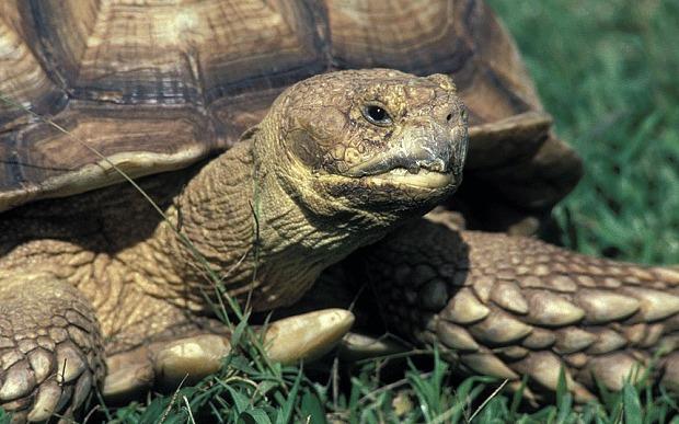 命运坎坷!英乌龟2天内被连续偷2次