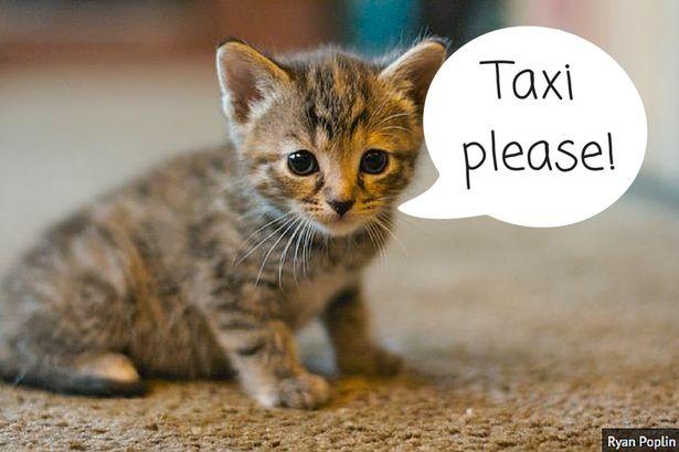 澳大利亚现租猫服务治愈人心