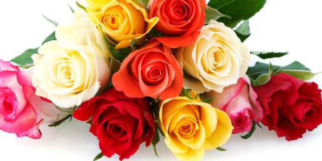 情人节必备功课 玫瑰花语学起来