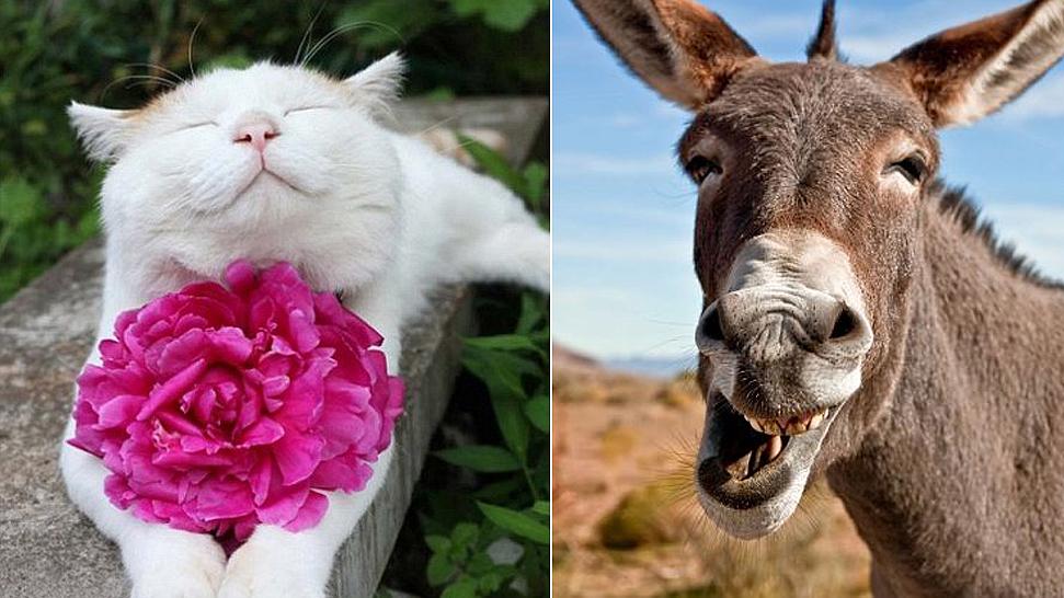 动物笑脸表情分享展示