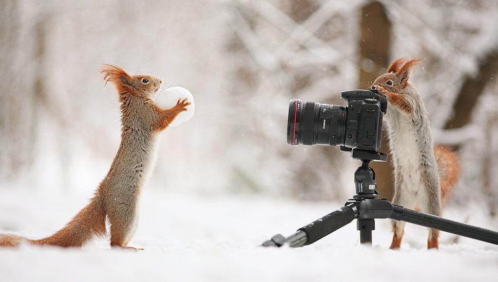 """图片一周精选 俄罗斯松鼠扮摄影师""""抓拍""""伙伴"""