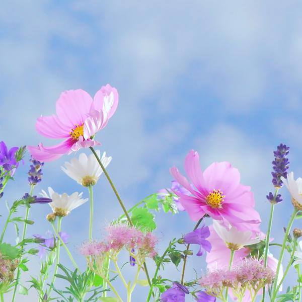 BVLGARI 香氛花园的梦幻之旅
