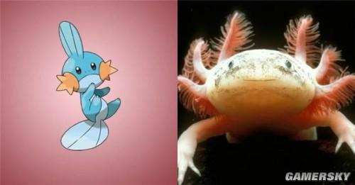 《口袋妖怪》原型 现实中沼越鱼也已看清一切