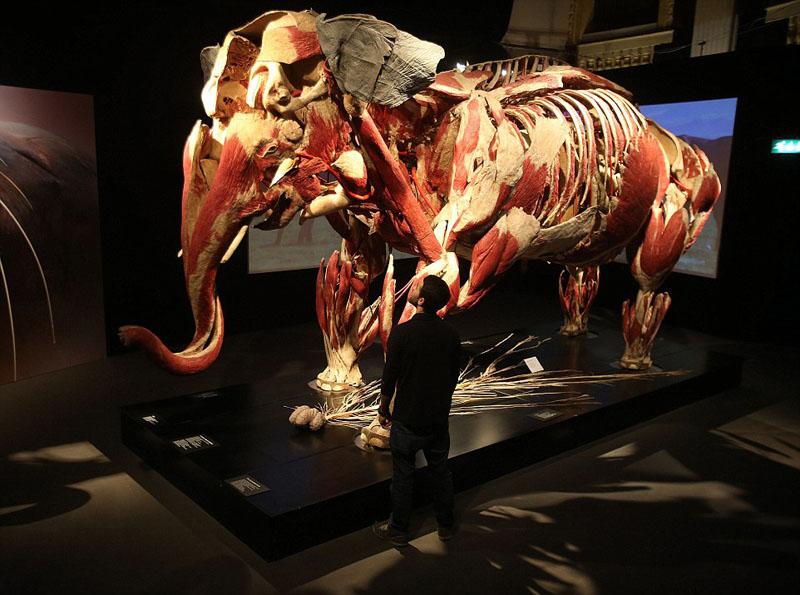 爱尔兰动物解剖展 清晰呈现骨骼构造