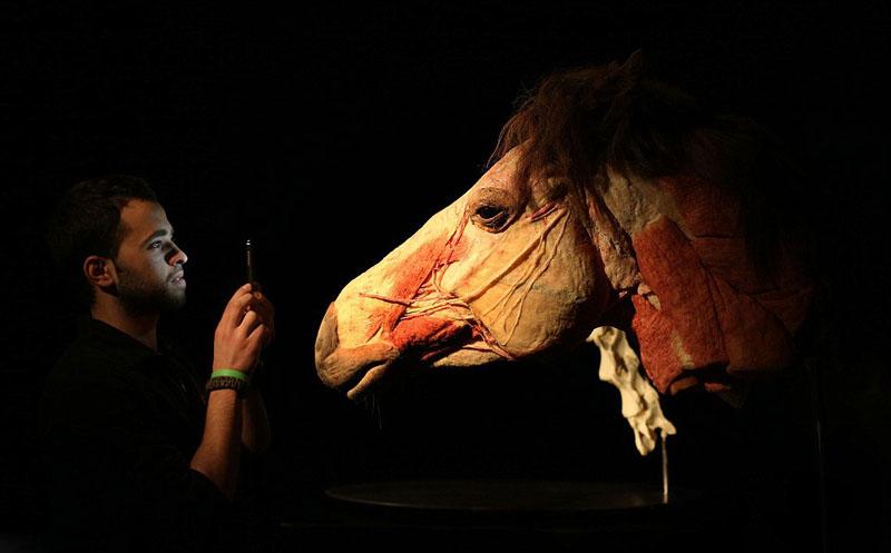 """【环球网综合报道】据美国《纽约每日新闻报》3月11日报道,""""死亡博士""""Dr. Gunther. von. Hagens (冯巩尔特哈根斯) 于3月11日当天在爱尔兰都柏林的百老汇剧院举办最新动物解剖展,呈现了一个其妙的解剖构造世界。   展会中随处可见骨头肌肉清晰可见的动物标本。这场展览展出了约100个动物塑化样本,对大象、猩猩、长颈鹿、黑熊,鲨鱼等许多动物进行解剖展示,为参观者们提供一次""""解刨学之旅""""。馆长安吉丽娜博士在其官网上称:""""这场"""