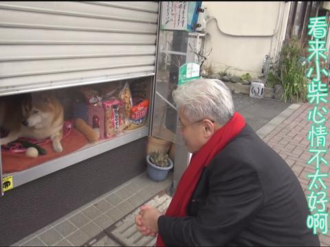 心情不爽!蒋丰探访日本杂货店柴犬shiba君遭黑脸