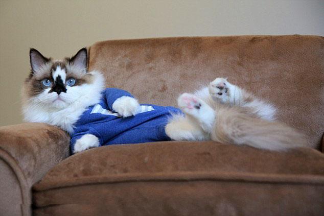 壁纸 动物 猫 猫咪 小猫 桌面 634_423