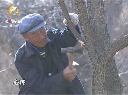 山西临县耗资4.7亿灌溉工程成摆设 灾民忍痛砍树