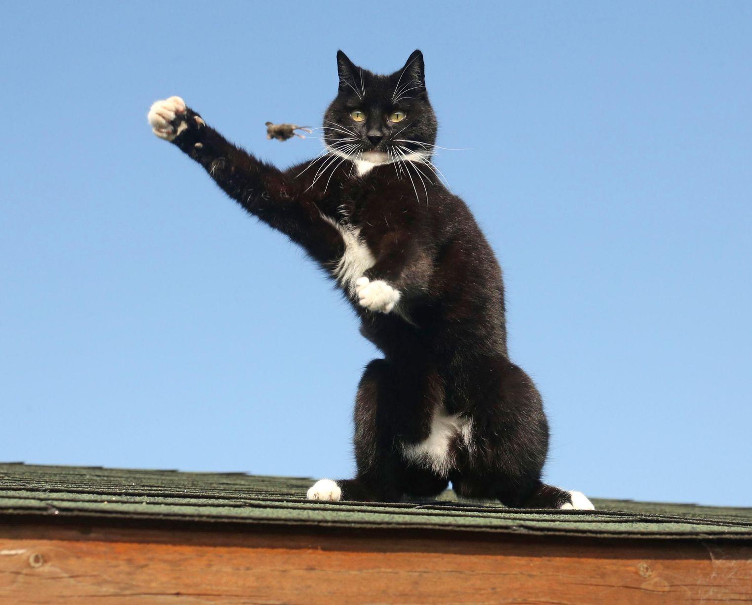 现实版《猫和老鼠》:英建筑顶上演猫戏鼠大戏