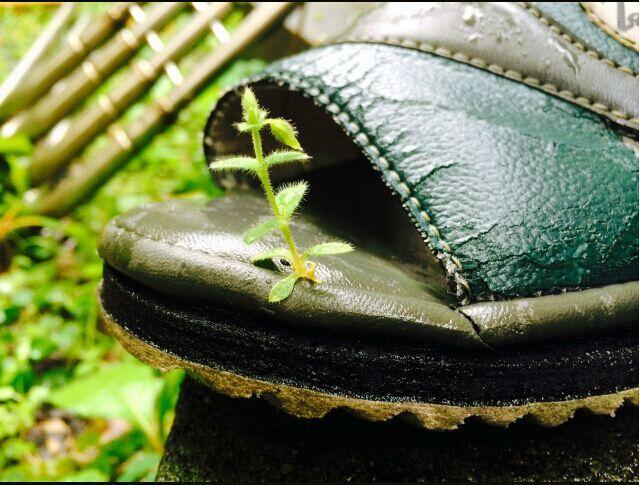 """日本凉鞋夹缝间长出植物 """"草坚强""""获关注 - 施来村 - 上下四方宇的博客"""