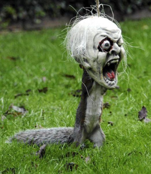 囧图天下:奇葩动物刷新你的搞笑下限