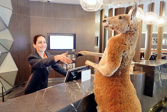 无奇不有!澳动物在酒店登记入住