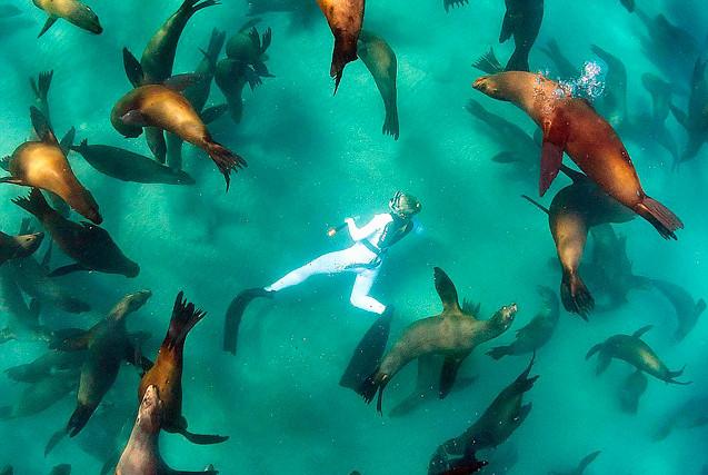 荷兰摄影师潜水拍摄小海狮憨态萌照