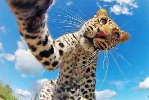 """全球动物疯狂""""自拍""""惹人爱"""