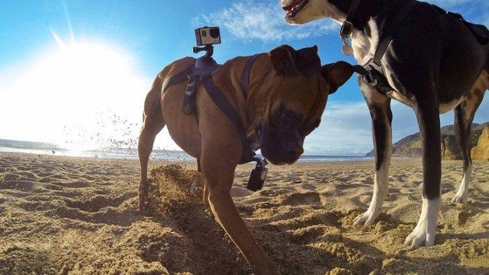 未来,GoPro不需要大疆,大疆也不需要GoPro