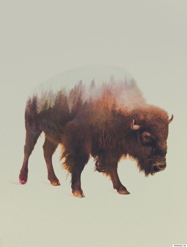 挪威艺术家利用ps技术使动物与自然浑为一体