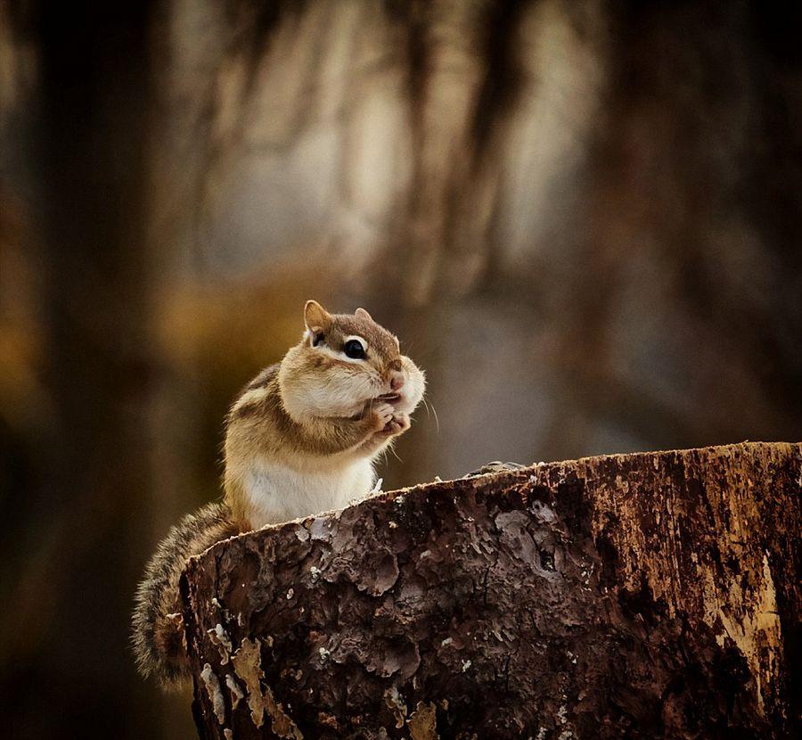 国际野生动物摄影大赛优秀作品(9/20)