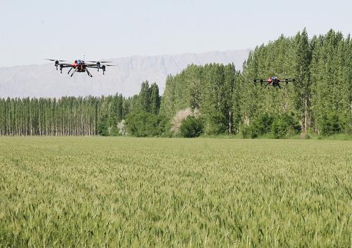新疆兵团用无人机给3万亩小麦喷药 防控病虫害
