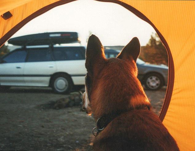 美摄影师以微电影纪念与爱狗情义