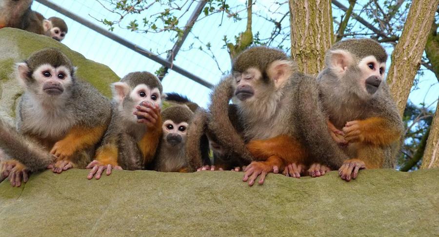 英动物园摄影大赛获奖作品出炉