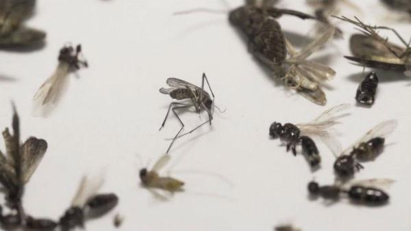 微软用无人机追踪蚊子 旨在扼杀新型疾病
