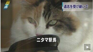 日本猫站长小玉部下二玉替其值班 迎接前来悼念游客