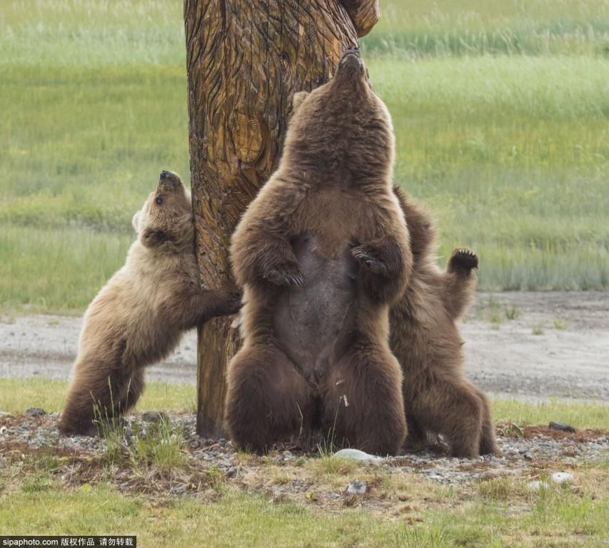美国动物园木头熊雕塑成抓痒板