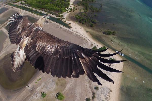 刺激无比!与鹰同飞 法国无人机比赛美图秀