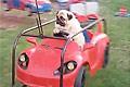 泰国哈巴狗坐旋转飞车
