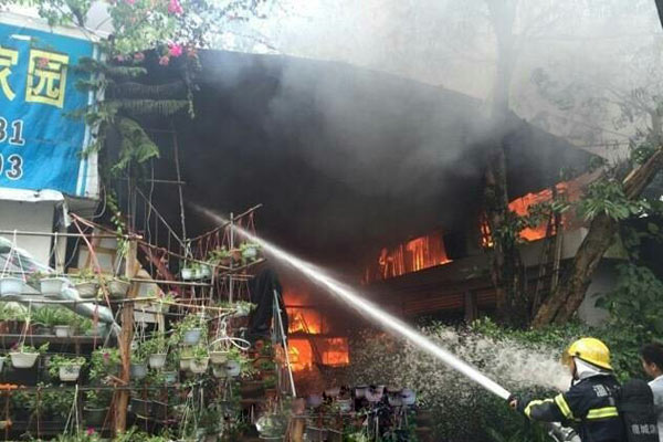 浙江温州花鸟市场发生火灾 好多动物被困