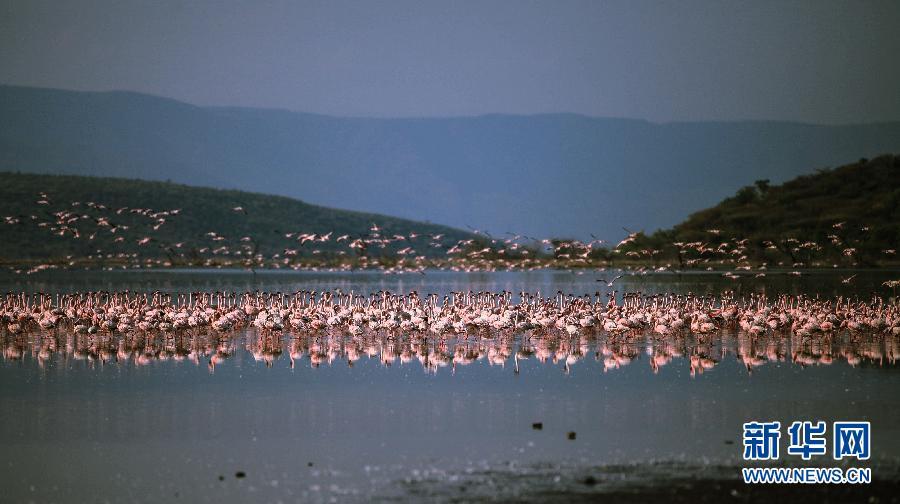 位于肯尼亚东非大裂谷地区中部的博戈里亚湖是一个内陆咸水湖泊,图片