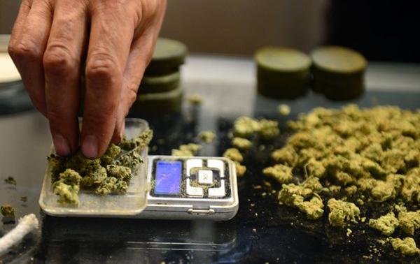 以色列科学家研究称大麻有加快骨骼恢复生长功能