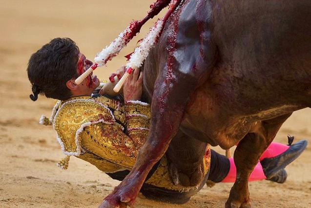西班牙斗牛士剑刺公牛反被顶受伤