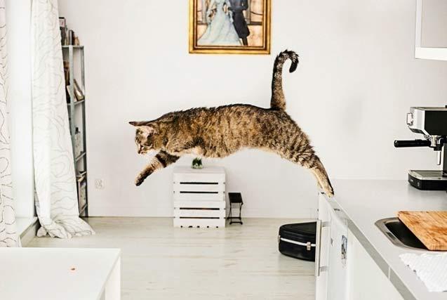 波兰摄影师拍残疾猫咪写真正视缺陷