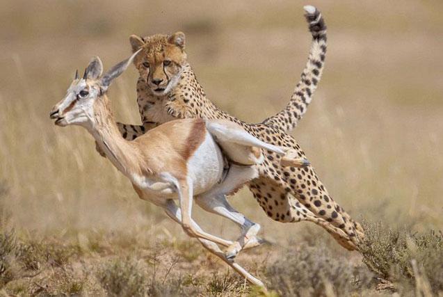 摄影师环球拍摄野生动物日常生活瞬间