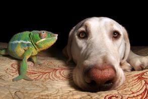 让人惊叹的异种错位友谊